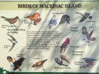 Mackinac birds